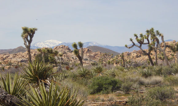 Post Image 5 Great Places to Camp on Public Lands Joshua Tree National Park California - 5 Great Places to Camp on Public Lands